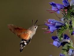 Massagetherapie Wilko Jongman Kolibri nieuwsgierigheid open staan voor verandering
